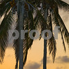Vertical image palm trees at twilight Miami