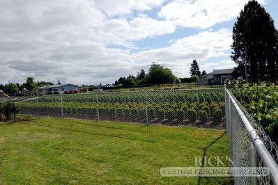 4128 - Galvanized Chain Link Fencing