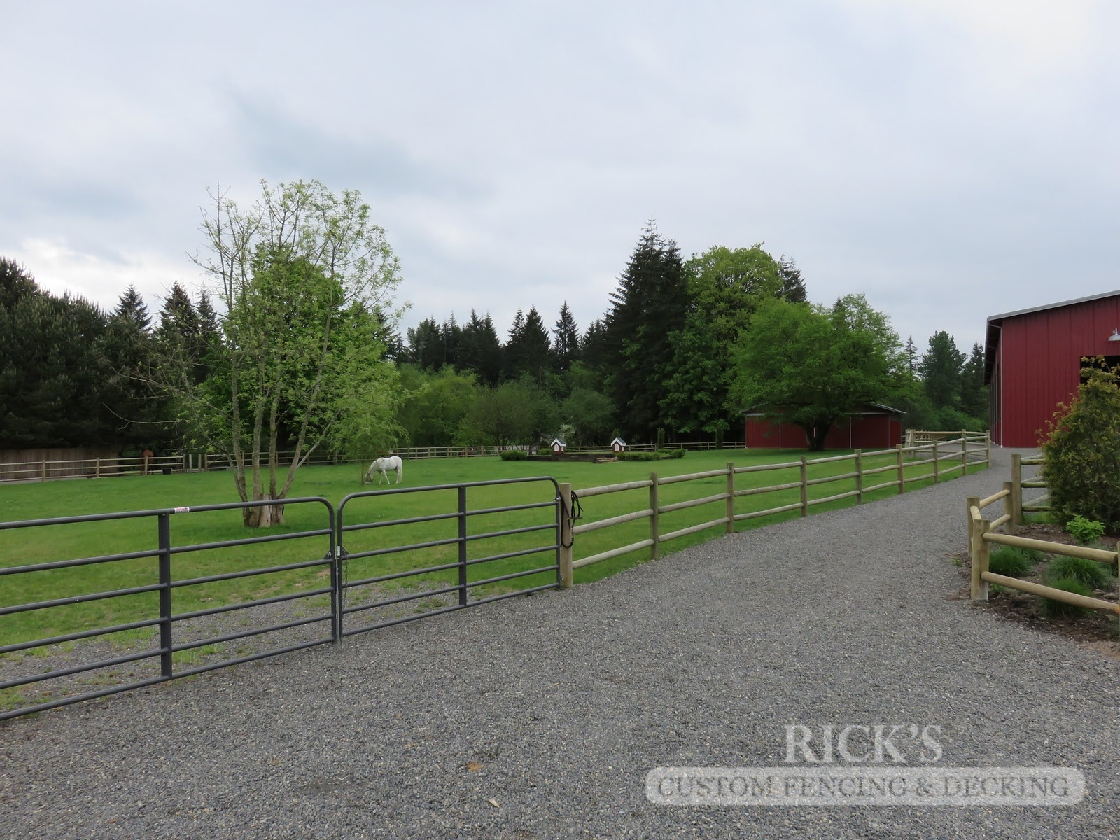 2448 - Wood Pasture Fencing