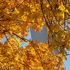 Arch through Fall leaves