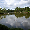 Ducks in Morikami Japanese Garden in Del Ray, Florida