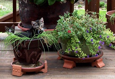 General Toes in the pot with sister Ms  Sherman in the background -  PICT0004-2