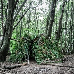 A forest Den