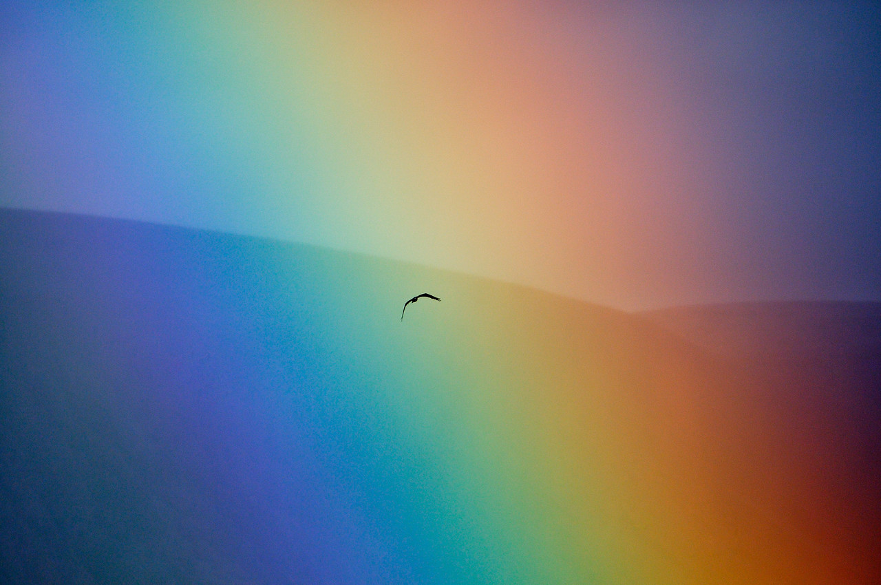 Osprey in the Rainbow.