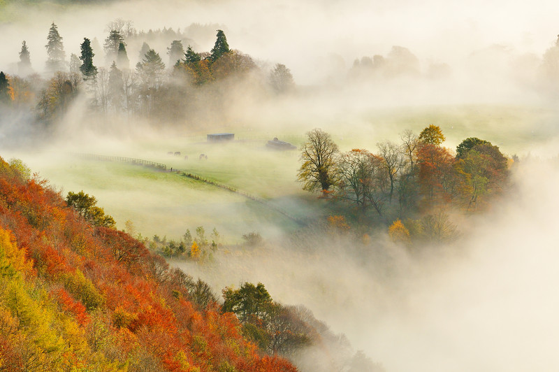 A misty morning over a mixed woodland in autumn.