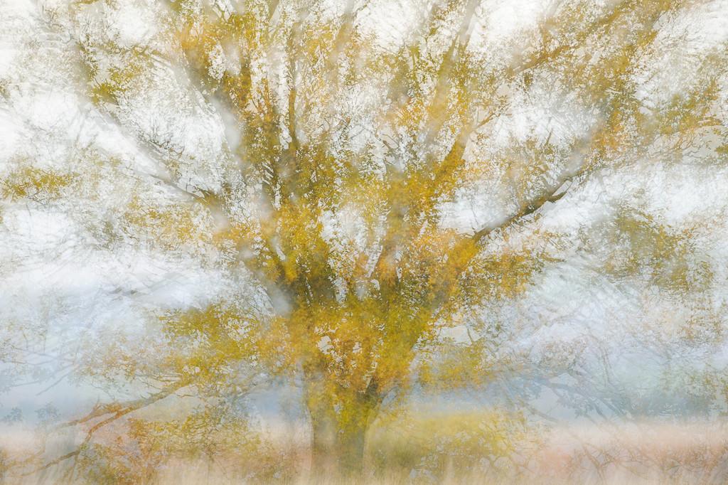 Abstract Oak Tree.