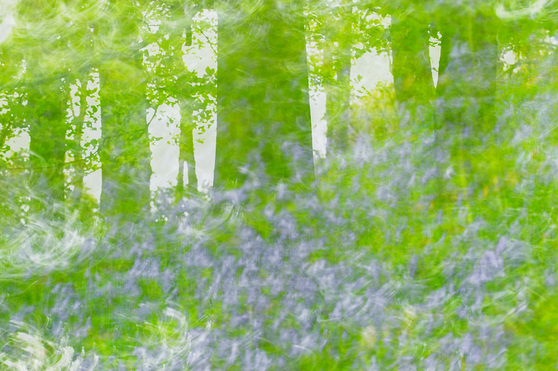 Abstract Bluebell Wood.