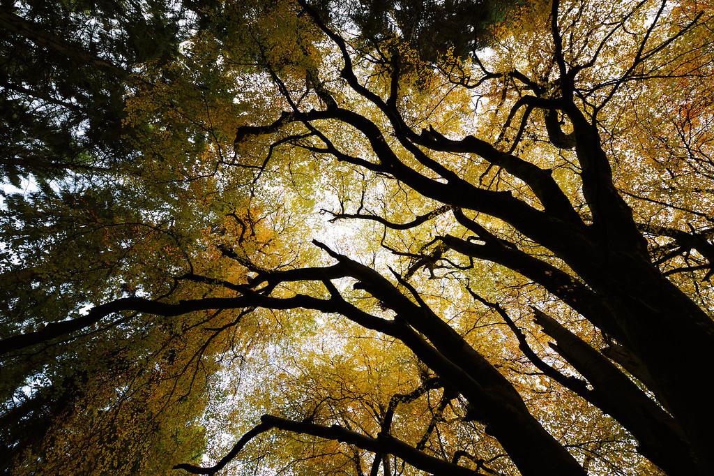 Abstract Beech Woodland.
