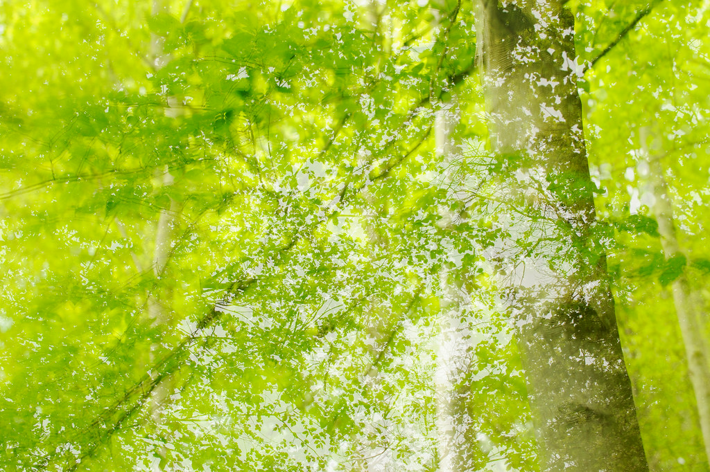 Abstract Spring Woodland.