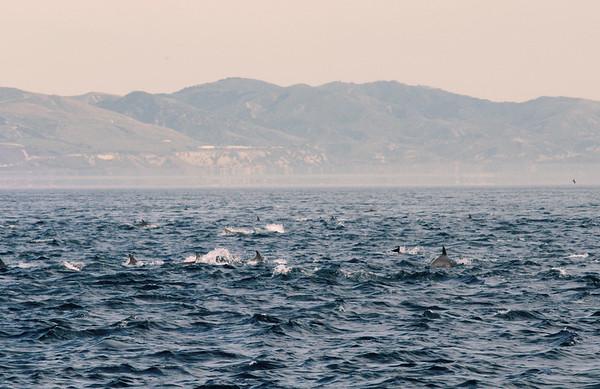 Santa_Barbara_Dolphins_Lifestyle
