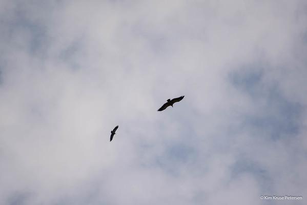 Fugle i Aveyron