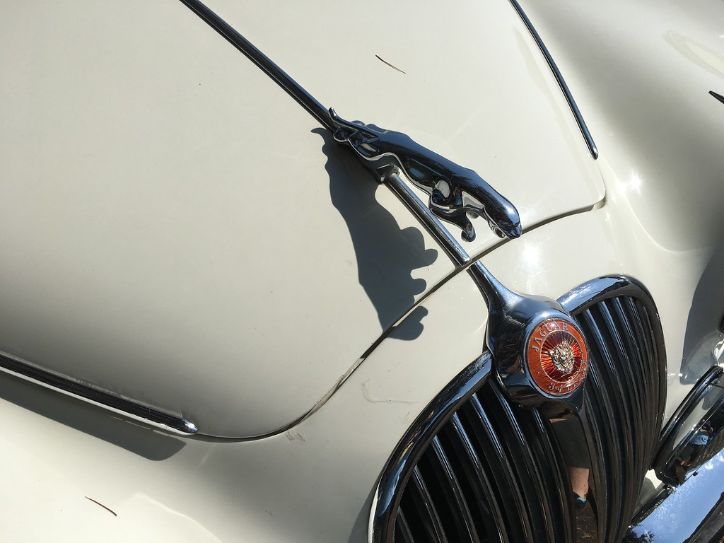 . A Jaguar hood ornament is reflected on the hood of a car in Ferndale. (Ruth Schneider - The Times-Standard)