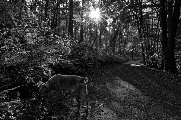 Out in the woods with Mora (b/w)