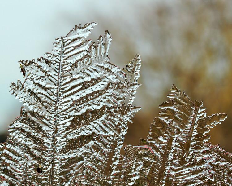 Clear Ferns