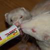 Lollipop for ferrets<br /> <br /> Nyalóka