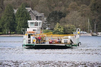 Mallard makes her way across to Windermere