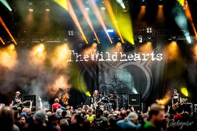©Rockrpix -  Wildhearts
