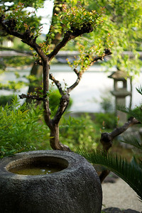 Detail from a Japanese Garden.