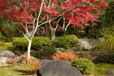 Traditional Garden at Nishimura Villa (Shinto Priest Home) with Autumn Foliage  South of Kamigamo Jinja Shrine, World Cultural Heritage in Kyoto
