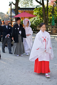 Wedding Ceremony at Kamigamo jinja Shrine in Kyoto with Shrine Maiden Leading Bridal Couple  World Cultural Heritage Site in Autumn
