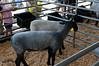 2008-07-20 - 039 - Orange County Fair - _DSC4963