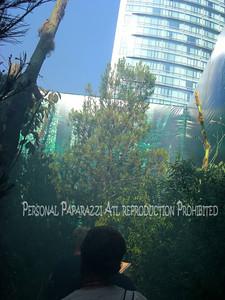 Comic Con 2012020