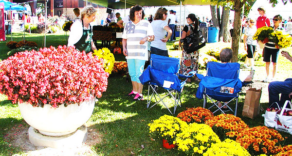 "Debbie Blank | The Herald-Tribune<br /> ""These are really pretty,"" says Ginny Stewart (left), Batesville, of the eight mums she's buying from Nancy Strassell, Milan."