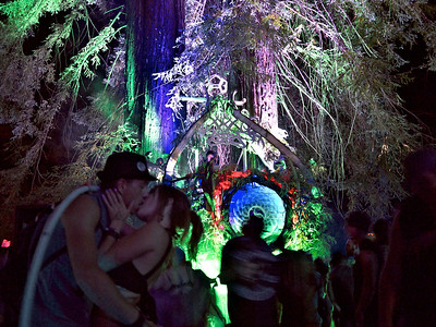 Enchanted Forest 2013