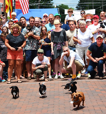 Diane Raver | The Herald-Tribune<br /> In its fourth year, the dachshund races are still crowd pleasers. Of course, some competitors are more enthusiastic than others.