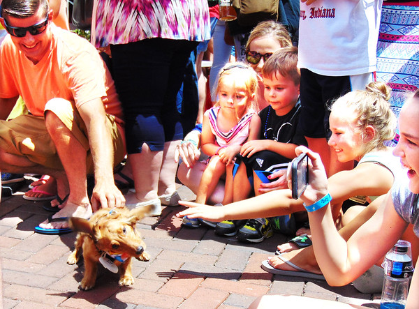 Debbie Blank | The Herald-Tribune<br /> After dashing to the end of the heat, this dachshund just had to shake the sweat off.