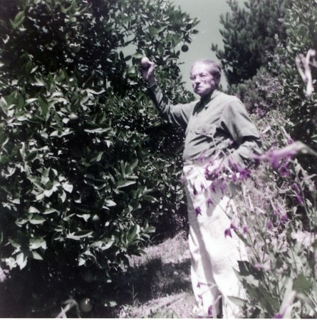 Feuchtwanger standing next to orange tree, holding either picked or unpicked orange in his right hand and looking at the camera, Pacific Palisades, Calif.