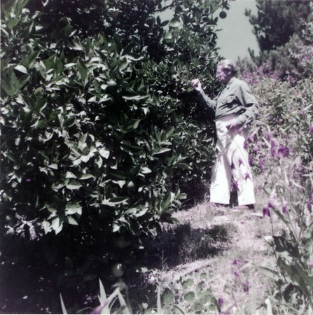 Feuchtwanger standing next to an orange tree, Pacific Palisades, Calif., 1957