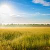 Flax field - Linen