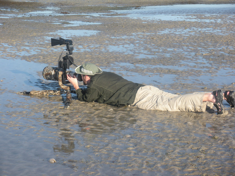 Bunche Beach, Florida.  Photographing shorebirds