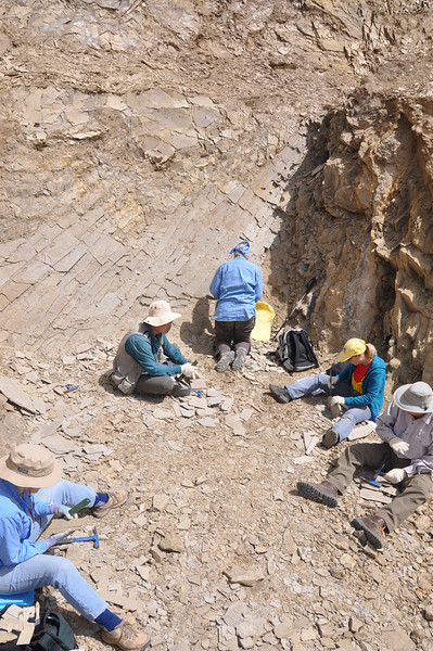 We're a busy bunch.  It's kind of nice to be able to do paleo field work without jackhammers, sledges, and heavy equipment!