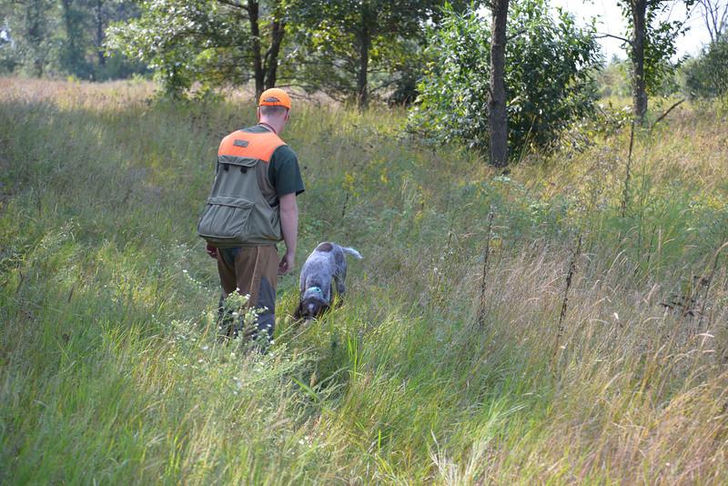 Abe of Ash Coulee; handler, Jon Hoffart; NAT Heartland Fall 2013 (17 months due to OCD)