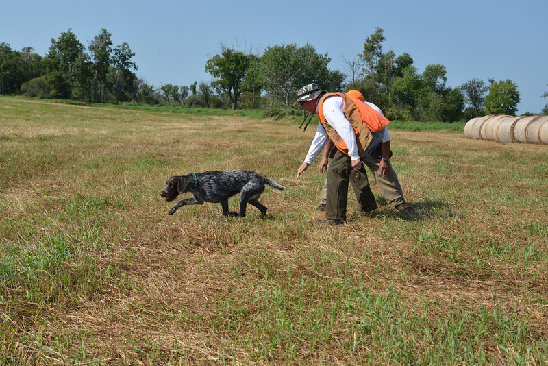 Mike Branigan and Archie on Pheasant track