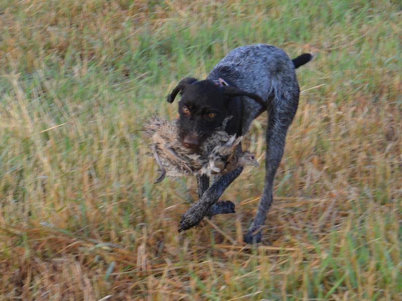 Desert Jazmine of Sandhill, Ken Hurtig, NAT tracking