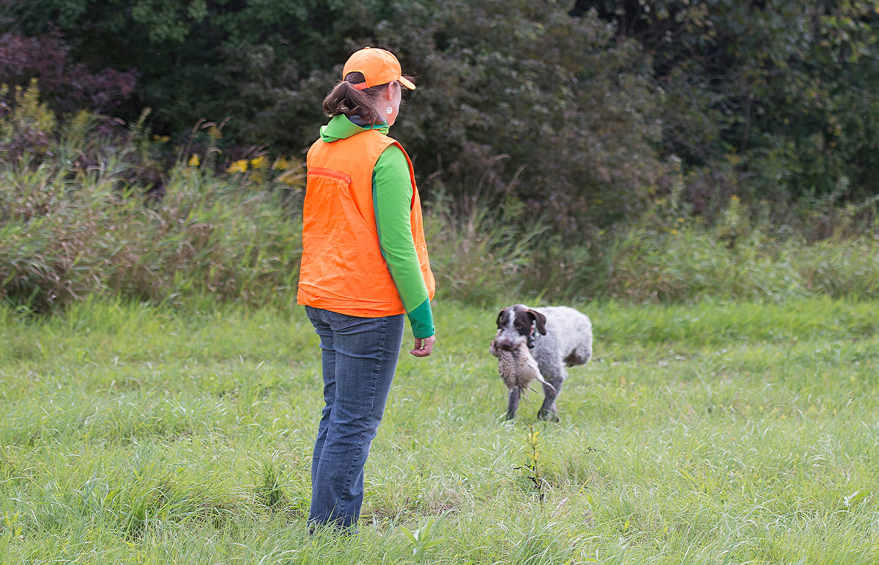 Ivar od Vavřineckélto rybníka; owner Anna Sorensen (rehomed from Kirk Dilly); Heartland Fall 2017 Test; Older Dog Hunting Test.