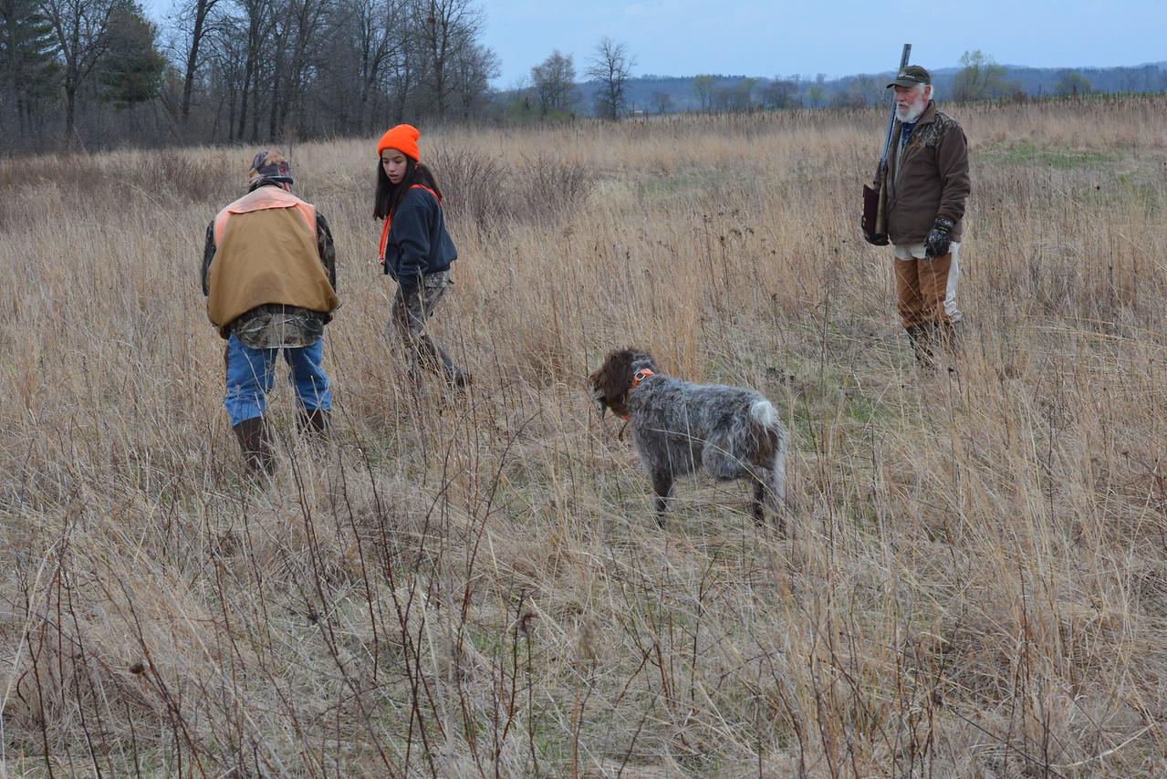 Jena od TyrseNAT retrieving pheasant  Handler: Emily Ramos Heartland Spring Test 2015