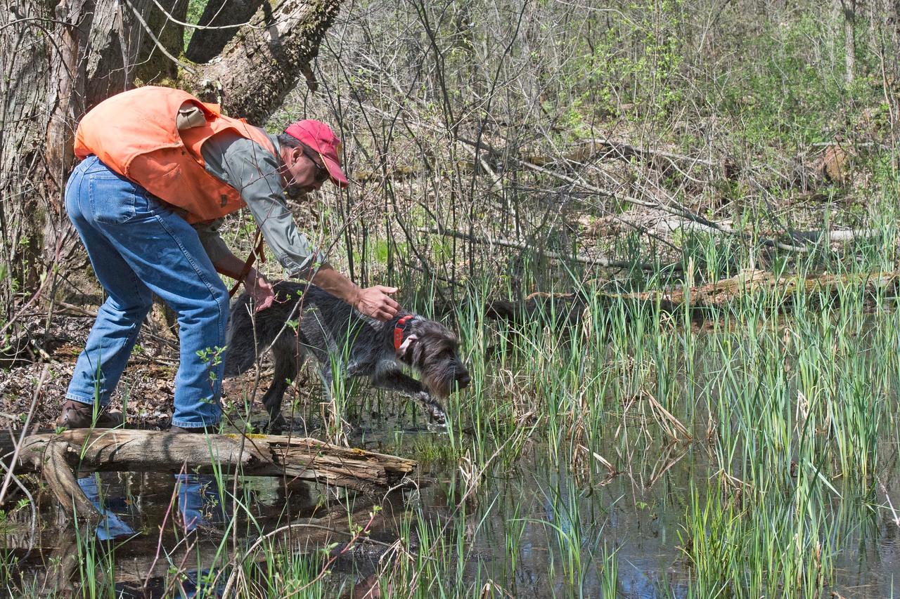 Arika of Zumbro Valley  IHDT.  Tracking the duck.