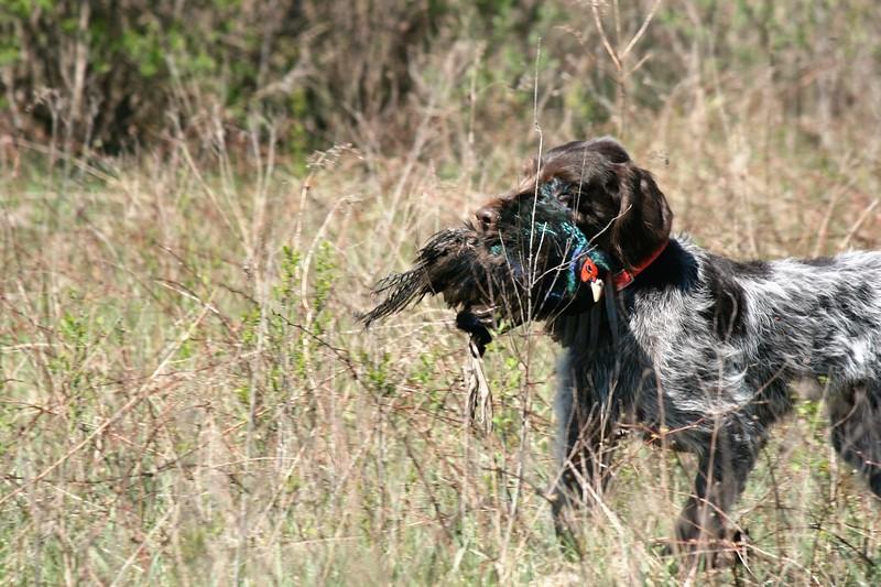 Aris od Blatského rybníka - NAT Owner: Roger Wegner.  Photo by Ann Pool