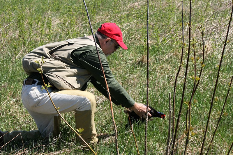 Judge Dave Findley releases pheasant for track of live bird.