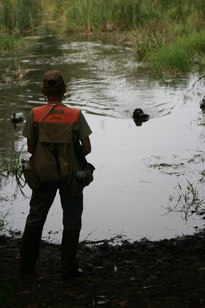Duck Retrieve in Utility Field Test