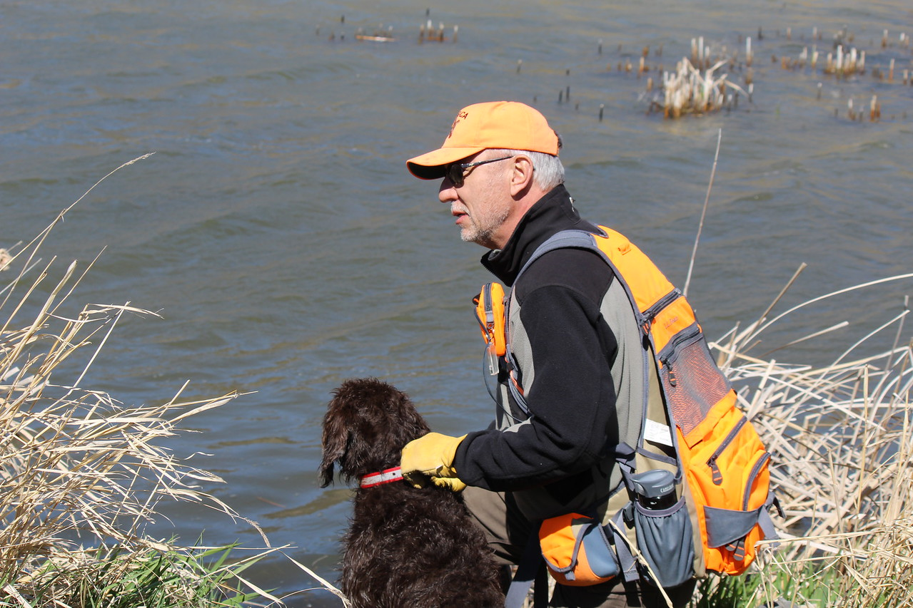 Rick Sojda & Eider set up for retrieve of duck