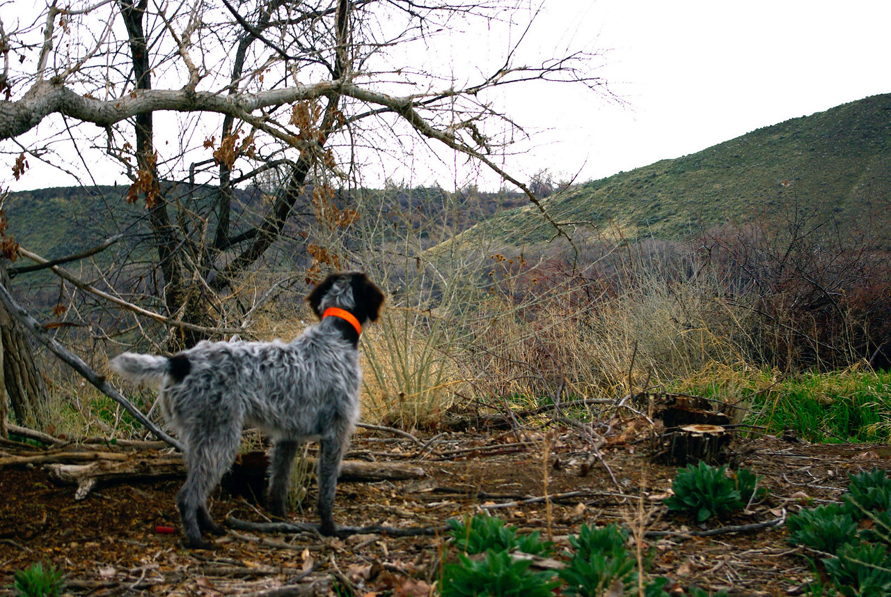 Brillo of Wolf Fork Canyon