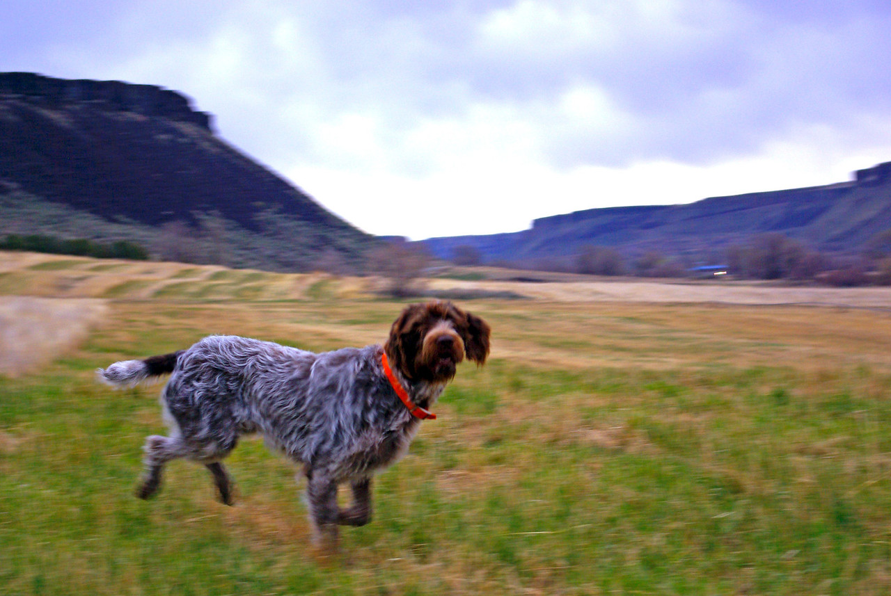 Bo of Wolf Fork Canyon