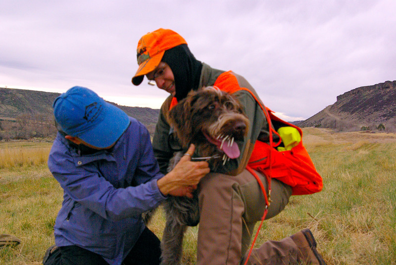 Bambino of Wolf Fork Canyon with owner Zeb Breuckman Quills