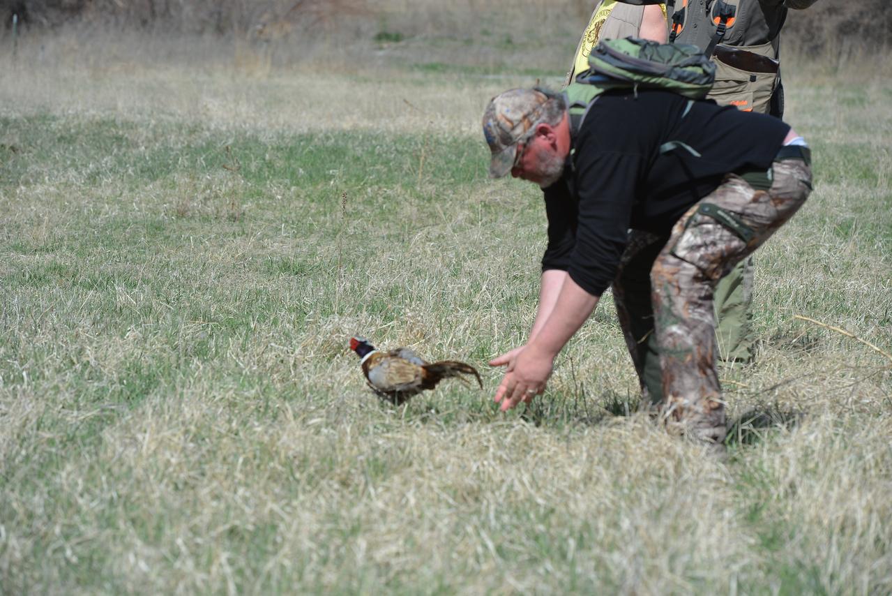 Cadenberg Hannah V. Luca (GWP) Intermediate Hunting Dog Test