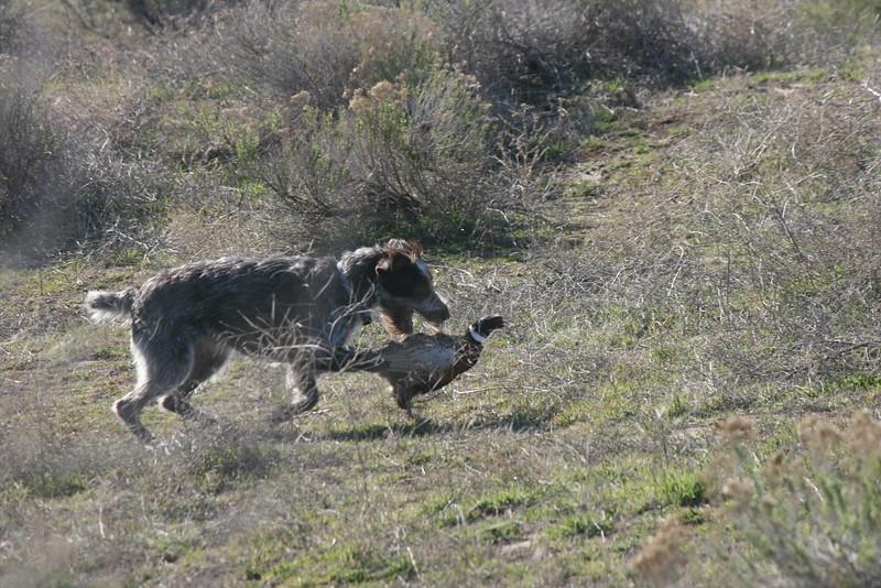 Chappy of High Desert IHDT;  F & Cliff Jaro
